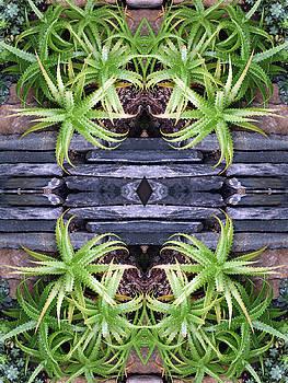 Spider Plant Series 3 of 4 by Keri Renee