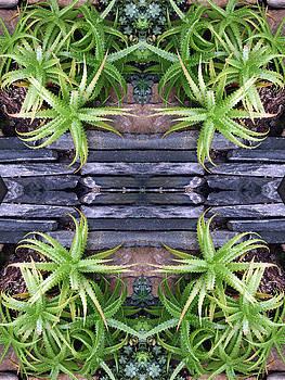 Spider Plant Series 4 of 4 by Keri Renee