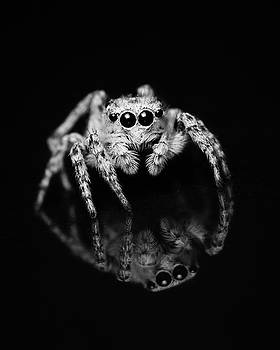 Spider Reflection by Mark Horton