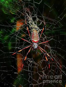Spider Silk by Patrick Witz