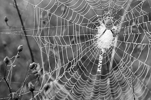 Spider Speak in Black and White by Keith Bowen