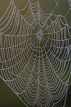 Juergen Roth - Spider Web and Morning Dew