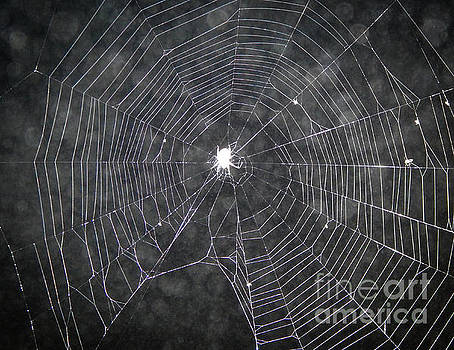 Spider Web At Night by Phil Perkins