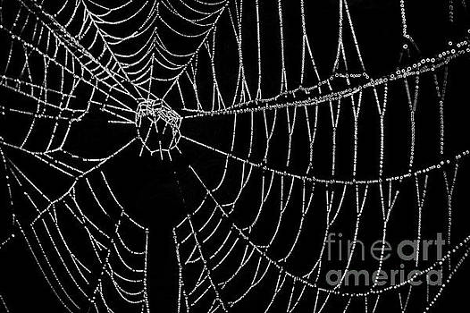 Spider Web Close-up by Pete Dionne