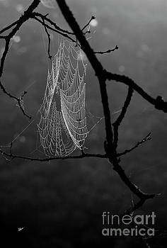 Spider Web Covered in Dew by Alana Ranney