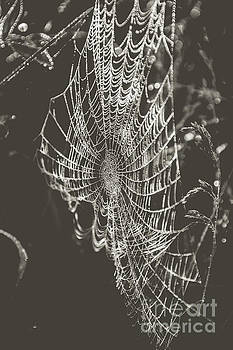 Spider Web in Black and White by Cheryl Baxter