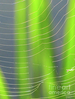 Spider Web in Light by Ron Tackett