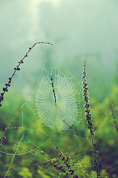 Spider Web in Morning Dew by Olivia StClaire