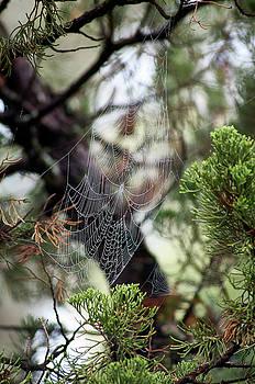 Spider Web In Tree by Willard Killough III