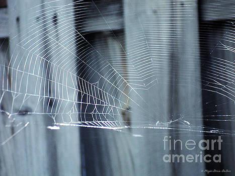 Spider Web by Megan Dirsa-DuBois