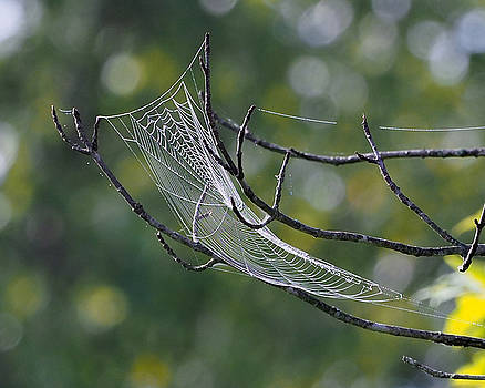 Spider Web by Paula Ponath