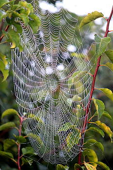 Spider Web by Sheri LaBarr