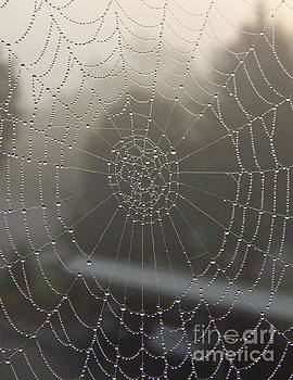 Spider Web With Morning Dew by Phil Perkins
