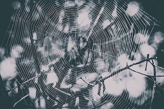 Spider webs and spiders by Maxwell Dziku