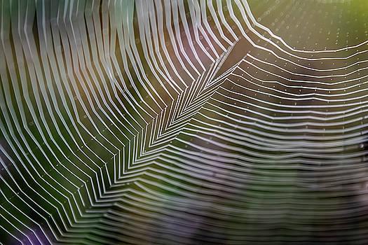 Spiderweb Feather by Christina VanGinkel