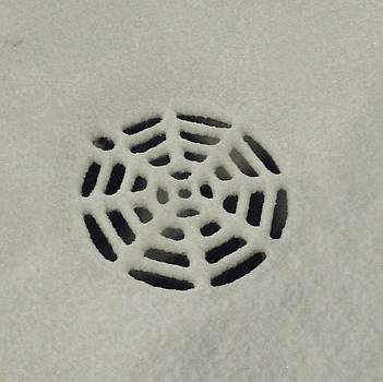 Spiderweb in the Snow by Anna Villarreal Garbis