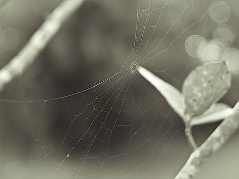 Laurie Hasan - Spiderweb