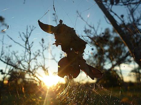 Spiderwebs by Meika Quinn