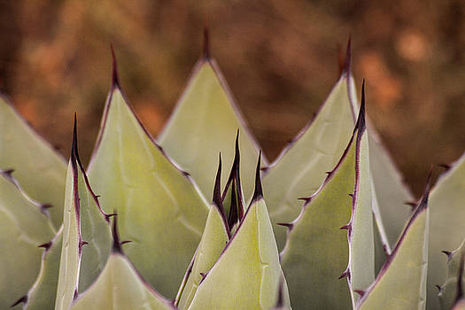 Spiky Serenade  by Ruth Jolly
