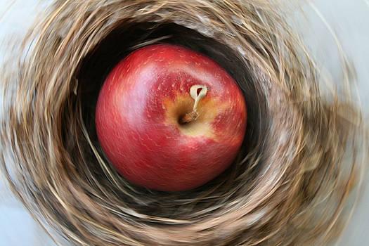 Spin Apple by Paulette Maffucci