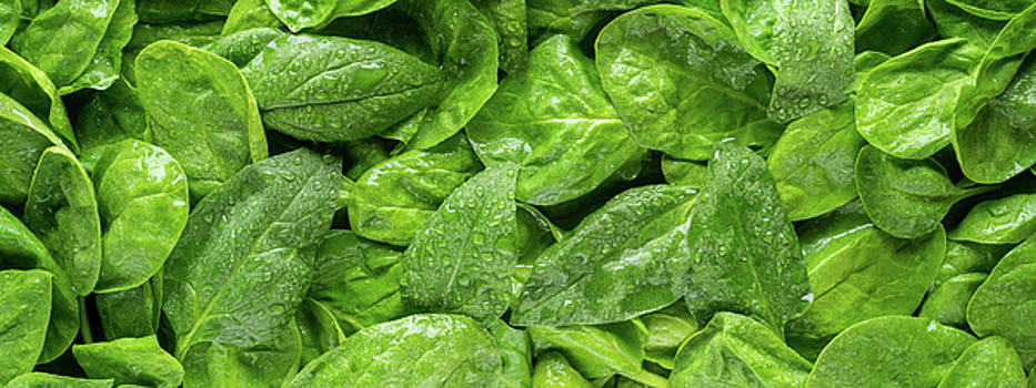 Spinach Panorama by Steve Gadomski