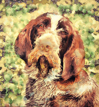 Spinone by Janice MacLellan