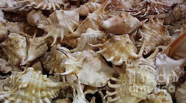 Paulette Thomas - Spiny Sea Shells