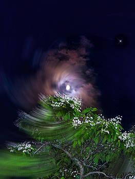 Glenn Feron - Spiral Lilac Moon