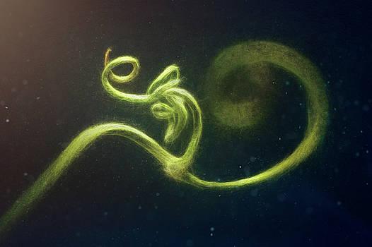Spiral by Scott Norris