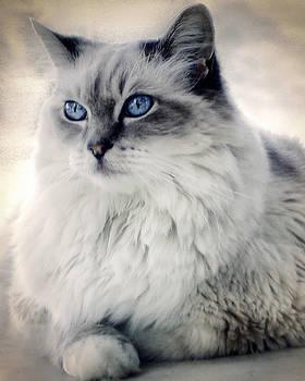Spirit Cat 2 by Darlene Kwiatkowski