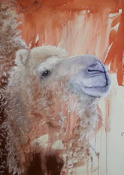 Spirit of the Camel by Jan Lowe