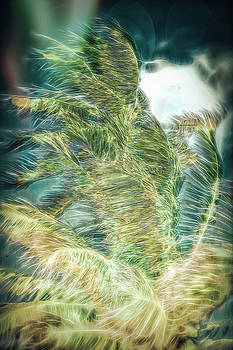 John M Bailey - Spirit of the Palm