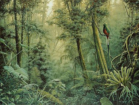Spirit of the rainforest. by Eric Wilson