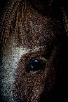 Spirit by Paul Neville