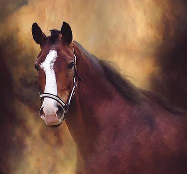 Spirit by Stephanie Calhoun
