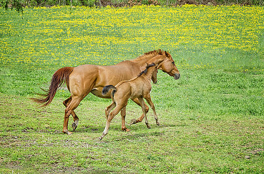 Spirited Foal by Donna Doherty