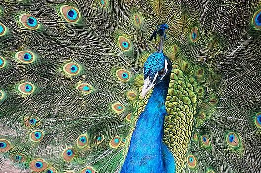 Spiritual Eye by Julia Ivanovna Willhite
