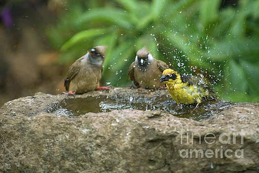 Splash Birdbath moment by Morris Keyonzo