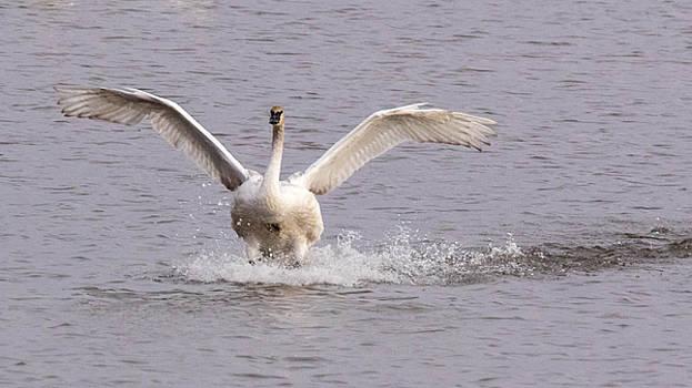 Splash Down by Sandy Brooks