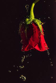 Splash by Joy McAdams