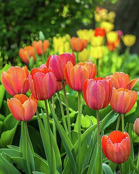 Splash of April Color by Bill Pevlor