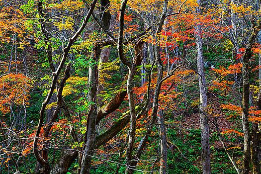 Splash of Autumn by Brad Brizek