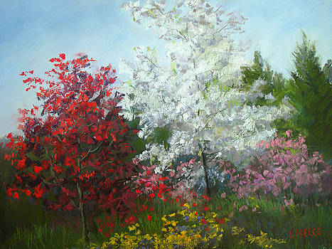 Splash of Color by Linda Preece