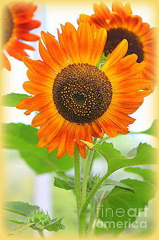 Vibrant Orange Sunflowers by Dora Sofia Caputo Photographic Design and Fine Art