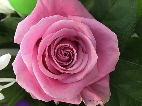 Splendid Rose by Marian Palucci-Lonzetta