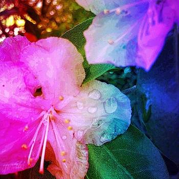 #splendid_flowers #colors_up by Lisa Pearlman