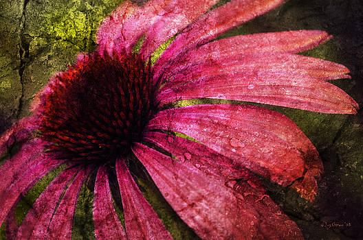 Splendor in Summer by Joy Gerow