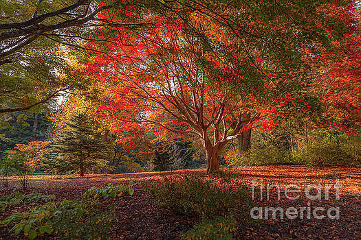 Splendor of Autumn at Biltmore by Dale Powell