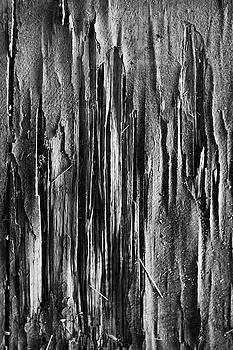 Splinter by Andrew Kubica