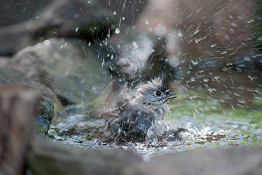 Dan Friend - Splish splash